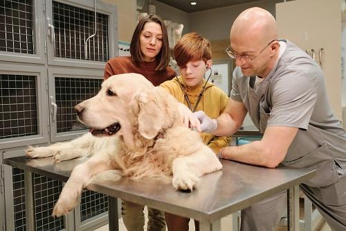 arthrose pour le chien